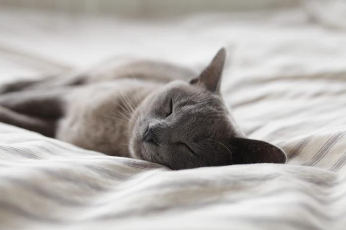 睡眠についてスタンフォードから学ぶ前に「禁酒」をはじめてほしい2つの理由
