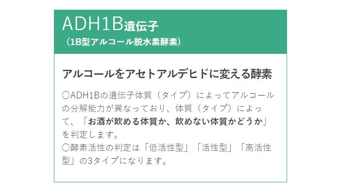 ADH1B遺伝子(1B型アルコール脱水素酵素)とは